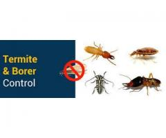 Four Factors to Warrant Summertime because the Season of Pests