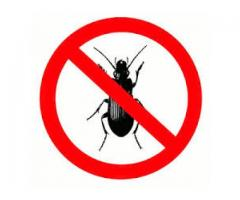 Everything Required to Understand Chemical Bug or Pest Control